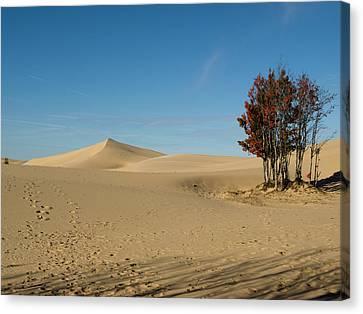 Canvas Print featuring the photograph Across The Sand 2 by Tara Lynn