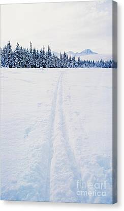 Across The Winter Landscape Canvas Print by Ronnie Glover