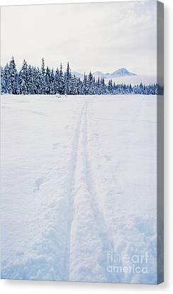 Across The Winter Landscape Canvas Print