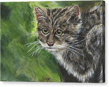 Acrylic Scottish Wildcat  Canvas Print