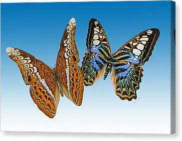 Admiral And Clipper Butterfly Canvas Print by Betsy Knapp