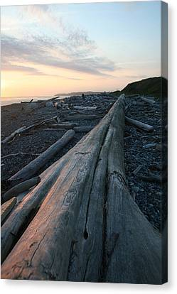 Admiralty Log Full Color Canvas Print by Dylan Punke