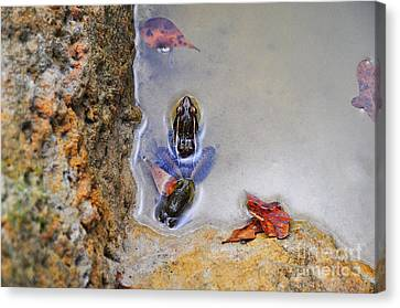 Canvas Print featuring the photograph Adopted Amphibian by Al Powell Photography USA