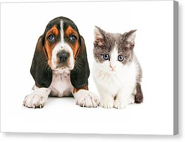Adorable Basset Hound Puppy And Kitten Sitting Together Canvas Print