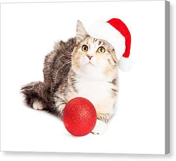 Adorable Calico Christmas Kitten Canvas Print by Susan Schmitz