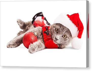 Adorable Christmas Kitten Over White Canvas Print by Susan Schmitz