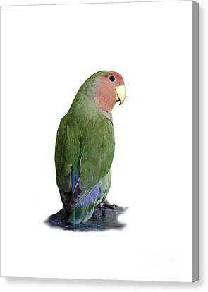 Adorable Pickle On A Transparent Background Canvas Print