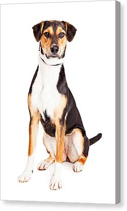 Adorable Young Mixed Breed Puppy Dog Canvas Print by Susan Schmitz