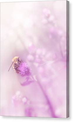 Canvas Print featuring the photograph Aduna by Greg Collins