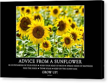 Advice From A Sunflower Canvas Print by Teri Virbickis