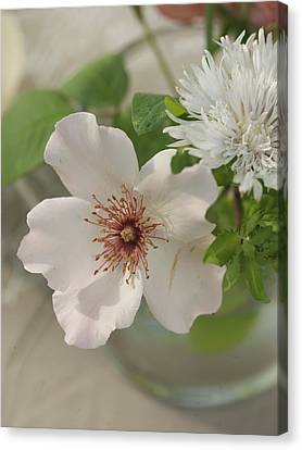 Aerial Close-up Of White Flowers Canvas Print by Gillham Studios