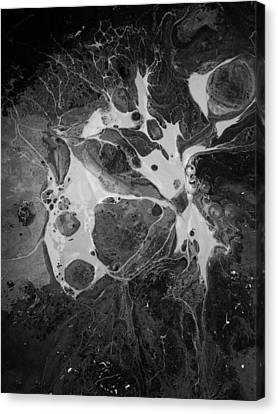 Aerial Photo Vulture Beak Yawn Canvas Print by Gyula Julian Lovas