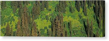 Aerial View Of Forest On Mountainside Canvas Print by Panoramic Images
