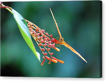 Aerodynamic Canvas Print by Teresa Blanton