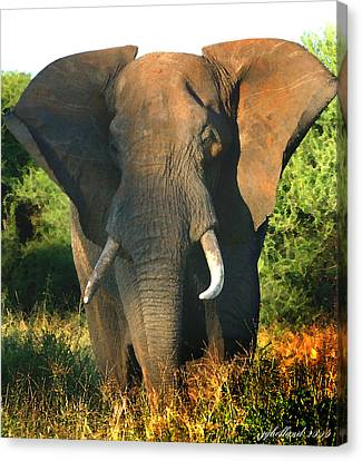 African Bull Elephant Canvas Print by Joseph G Holland