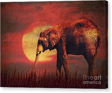 African Elephant Canvas Print by Angela Doelling AD DESIGN Photo and PhotoArt