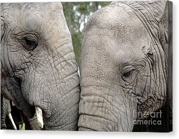 African Elephants Canvas Print by Neil Overy