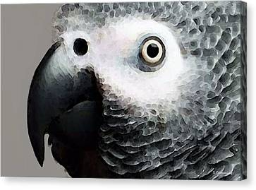 Parrots Canvas Print - African Gray Parrot Art - Softy by Sharon Cummings