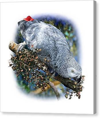African Grey Parrot A1 Canvas Print by Owen Bell