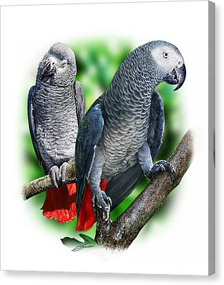 African Grey Parrots A Canvas Print by Owen Bell