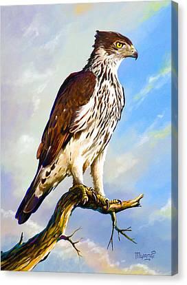 African Hawk Eagle Canvas Print by Anthony Mwangi
