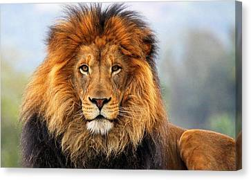 Lion Canvas Print - African Lion 1 by Ellen Henneke