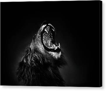 Ethical Values Canvas Print - African Lion Male Yawning Showing Fierce Canine Teeth by Jan Van der Westhuizen