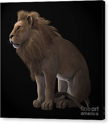 Masai Canvas Print - African Lion On Black by Corey Ford