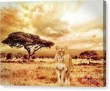 Feline Canvas Print - African Plains by KaFra Art