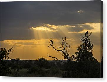 African Sunset 2 Canvas Print