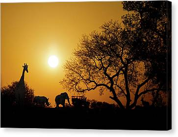 African Sunset Silhouette With Copy Space Canvas Print by Susan Schmitz