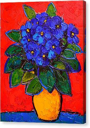 African Violets Canvas Print - African Violet by Ana Maria Edulescu