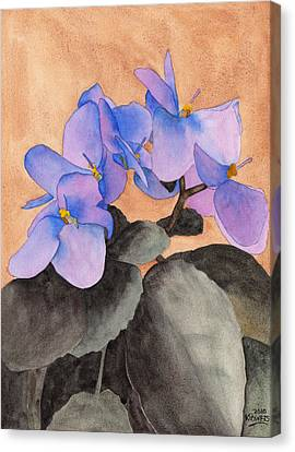 African Violets Canvas Print - African Violet by Ken Powers