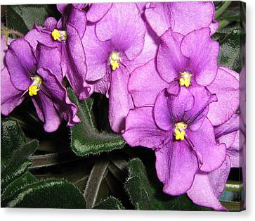 Canvas Print featuring the photograph African Violets by Barbara Yearty