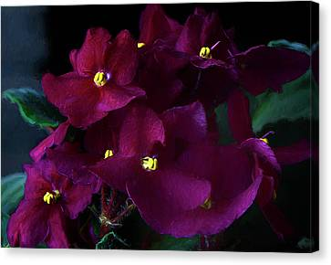 Canvas Print featuring the photograph African Violets Photo Art by Sharon Talson