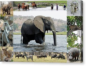 African Wildlife Montage - Elephant Canvas Print by Robert Shard