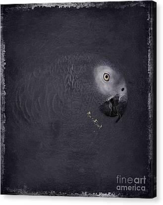 African Grey Parrot Canvas Print by Maria Astedt