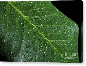 Closeup Canvas Print - After Rain by Angelo DeVal