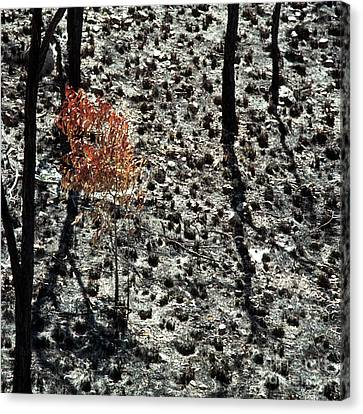 After The Bushfire Canvas Print