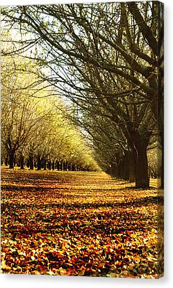 After The Harvest Canvas Print by Pamela Patch