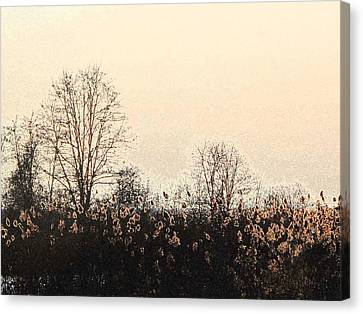 After The Leaves Dbae Canvas Print by Lyle Crump