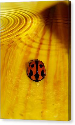 Macro Canvas Print - After The Rain by Lesley Smitheringale