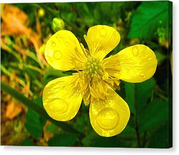 Flowers Canvas Print featuring the photograph After The Rain by Roberto Alamino