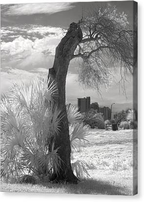 After The Storm Canvas Print by Fred Baird