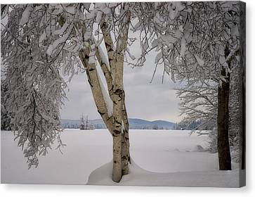 After The Storm On Highland Canvas Print by Darylann Leonard Photography