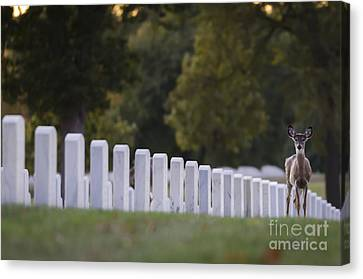 After Visiting Hours Canvas Print