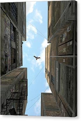 Raptor Canvas Print - Afternoon Alley by Cynthia Decker
