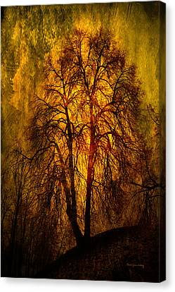 Afternoon Gold Canvas Print