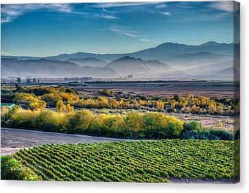Afternoon Light In The Salinas Valley Canvas Print by Bill Roberts