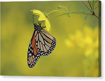 Canvas Print featuring the photograph Afternoon Snack by Ann Bridges